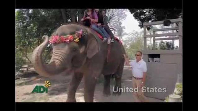 Why the circus is no fun for elephants