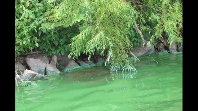 How to recognize a toxic algal bloom, and keep you and your pet safe