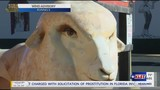 The San Angelo Sheep Spectacular is about to reveal ewe number 100